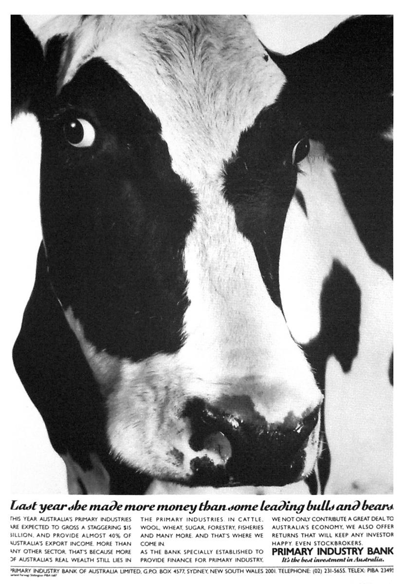 PI Cow